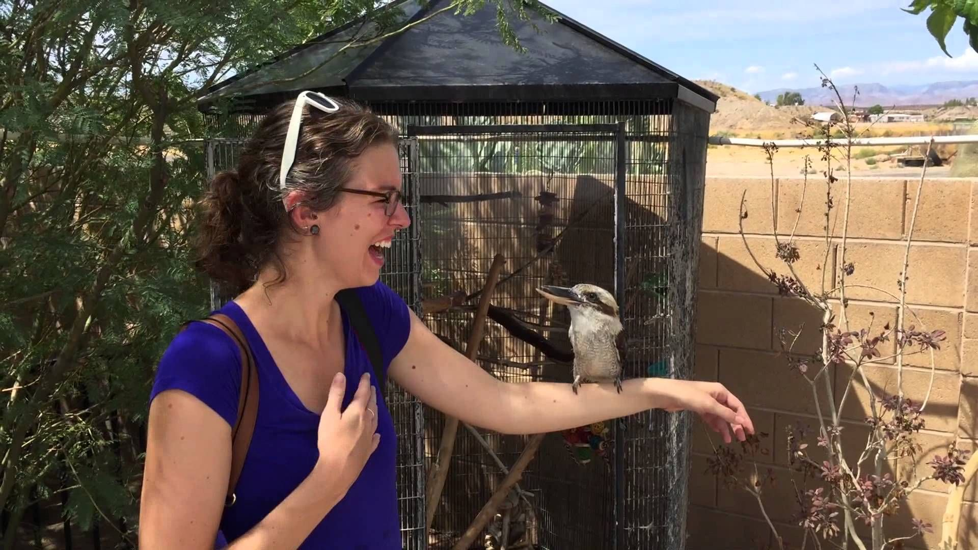 Kookaburra Laughing YouTube Laugh, Animals, Cute animals