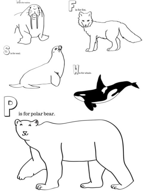 arctic animals printable coloring pages arctic malvorlagen arktis polargebiete. Black Bedroom Furniture Sets. Home Design Ideas