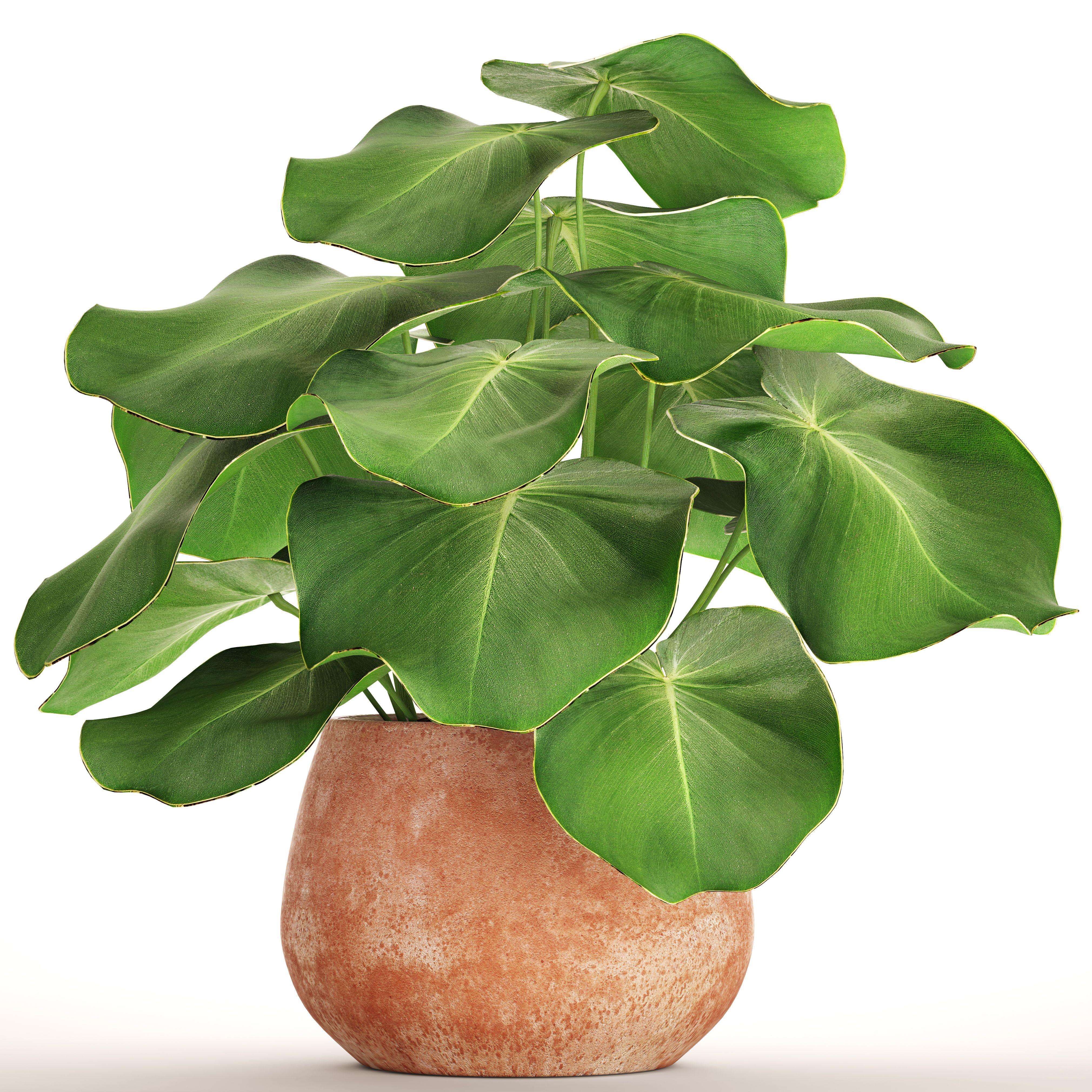 ingenious tropical foliage house plants. Tropical plant in pot Model Bush tropical 3D  Pinterest plants and 3d