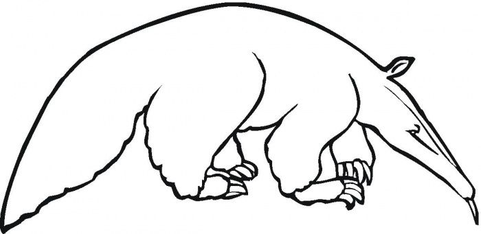 Animal Coloring Pages Anteater