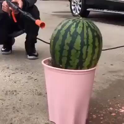 Pin on garden hose