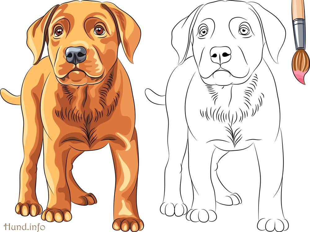 ausmalbilder mit hunden  malvorlagen tiere hund malen