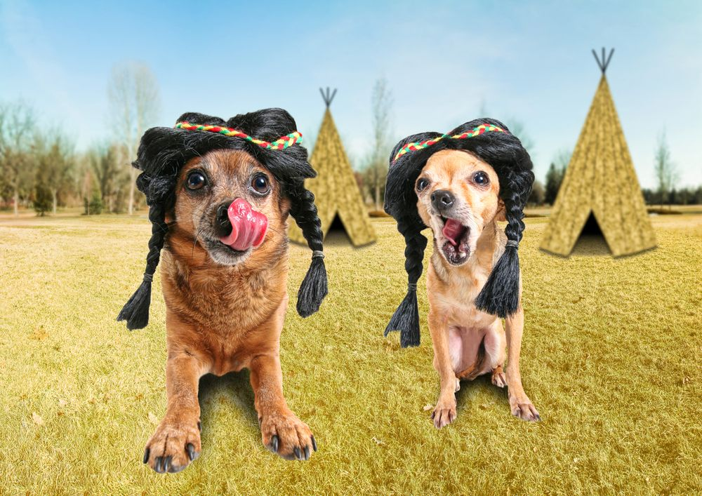 Image detail for -What Type Of Dog Is Best For You? « Choosing A Dog « Dogs ...
