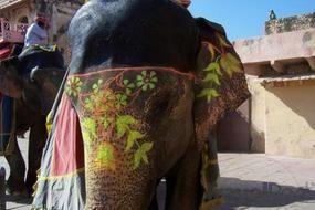 Google Image Result for http://images.travelpod.com/tw_slides/ta01/271/a9c/thumb_elephants-paint--jaipur.jpg