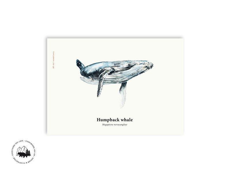 Illustrationen - Buckelwal | A3 Poster - ein Designerstück von everywhereyougo bei DaWanda