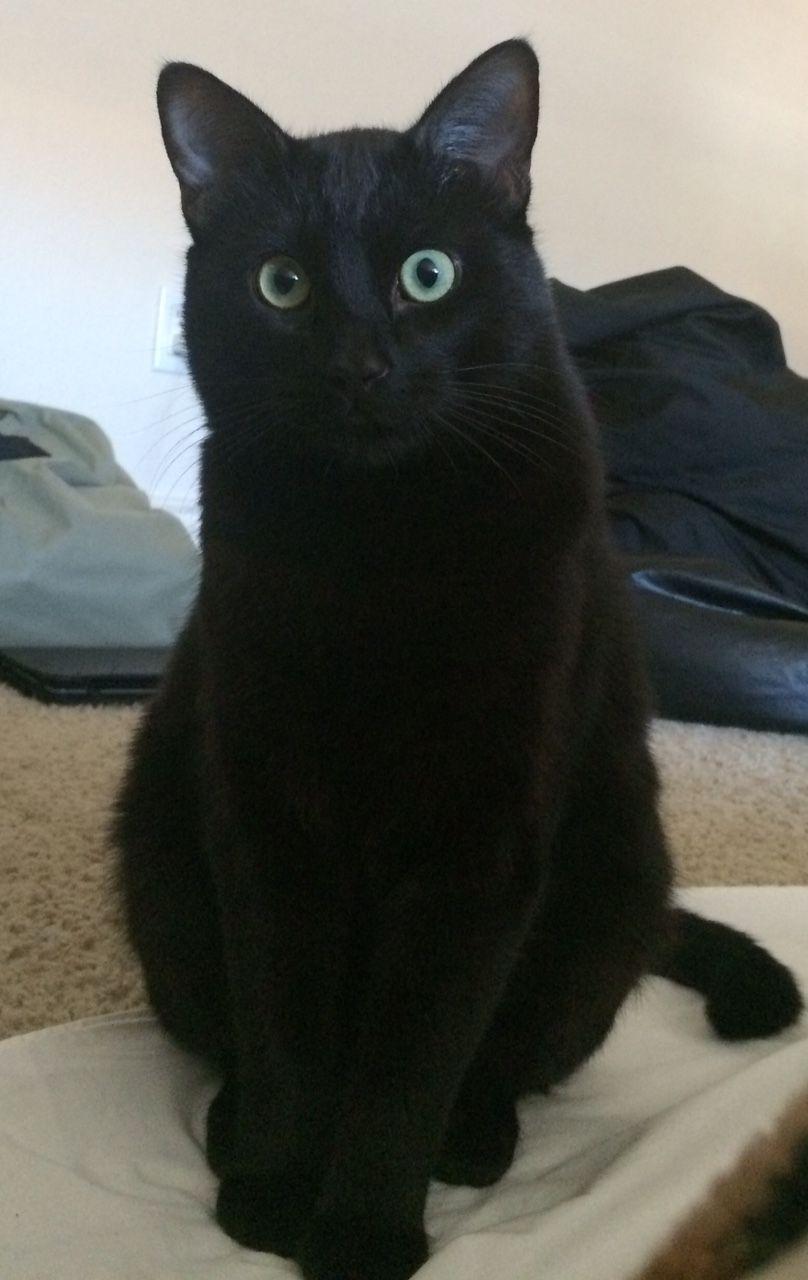 Black Cats Yohooo Cat Obsession Cute Cats Cats