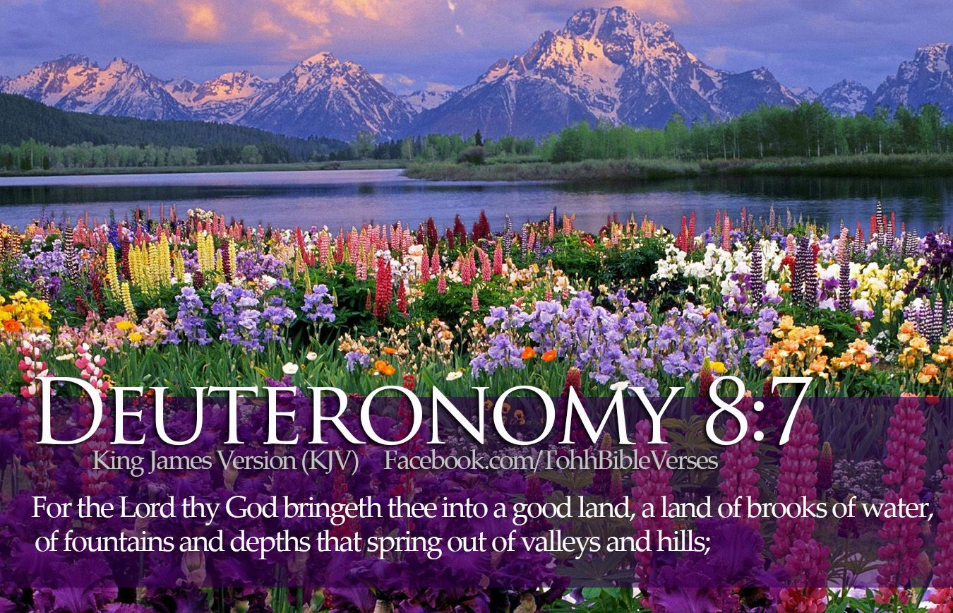 an analysis of the pure land scriptures Bible verses about planning ahead in the bible  let pharaoh proceed to  appoint overseers over the land and take one-fifth of the produce of the land   religion that is pure and undefiled before god, the father, is this: to visit orphans  and.