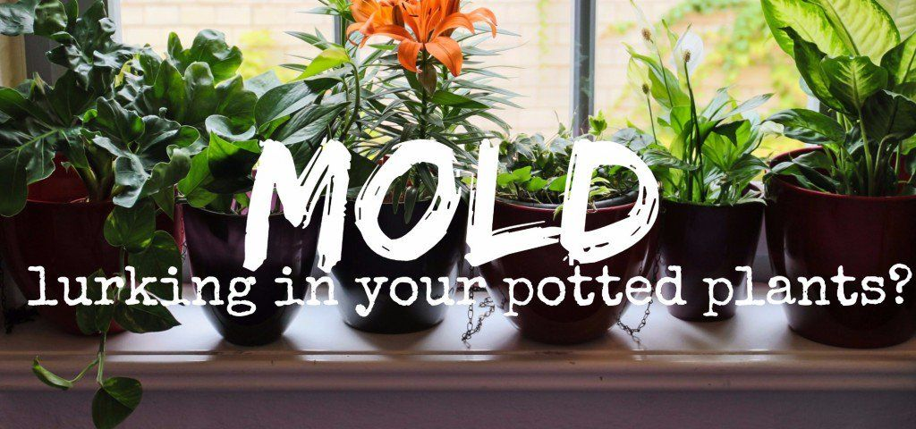 How To Get Rid Of White Fuzzy Moldy Potting Soil Plants Succulent Landscaping Potting Soil