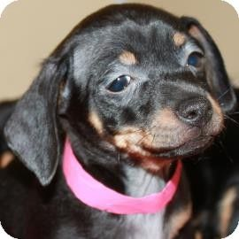 Pin On Puppies That Need A Home
