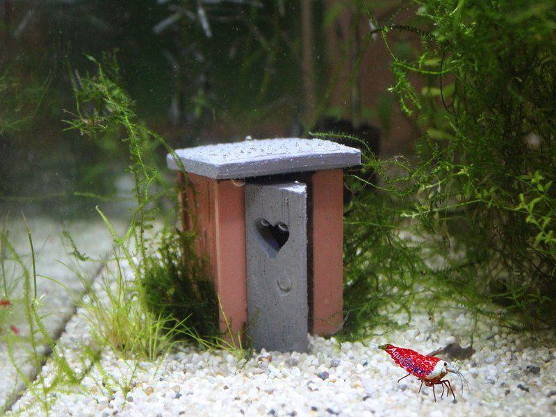 Garnelentoilette nano red wood top deko aquarium fische garnelen aquathier kreative deko - Nano aquarium deko ...
