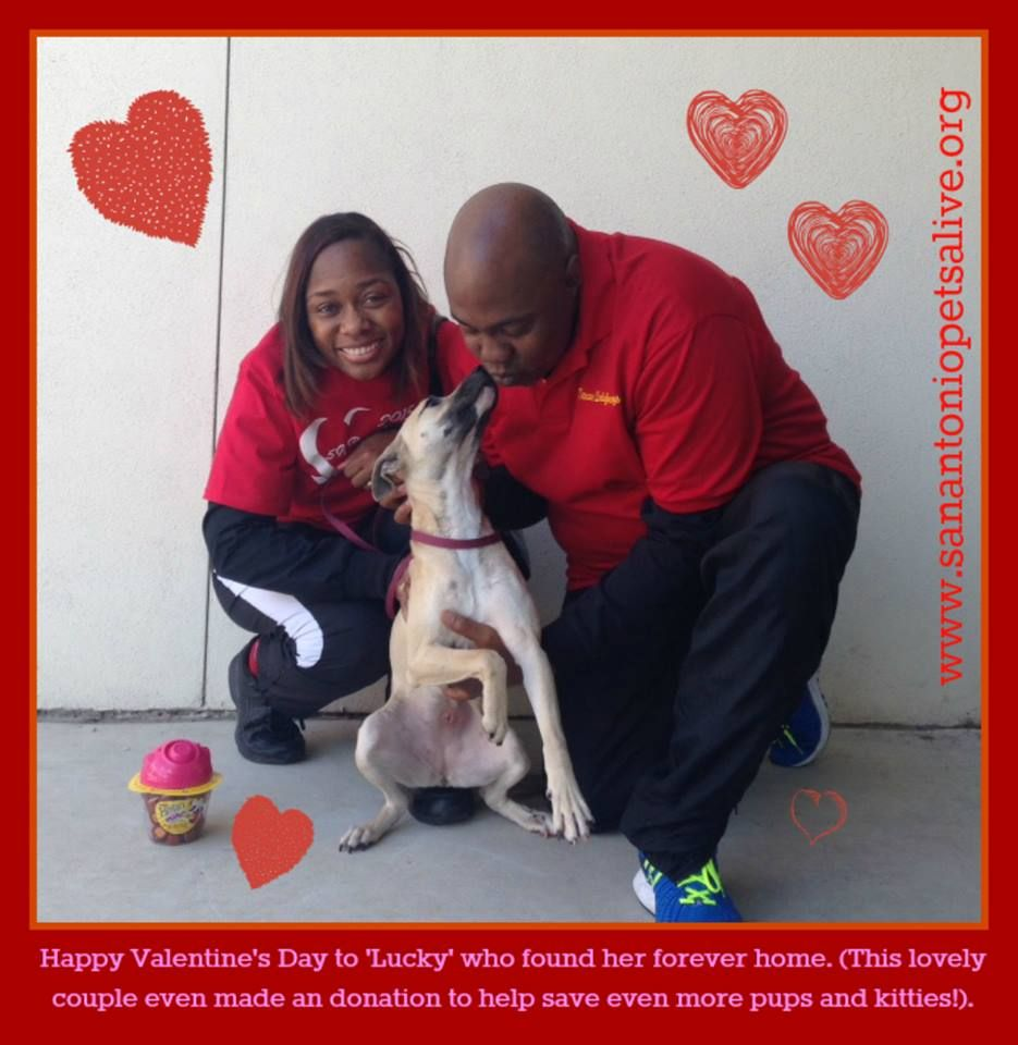 This very sweet couple fell in love with little Lucky A310194 ! She was in a foster home for a few months while she recovered from injuries from being hit by a car. She had a large open wound on her back leg when she came to us, but she has recovered great & now only a scar is left behind! Lucky is going to be very spoiled by her parents! They even donated $100 so SAPA could save more lives- happy day!