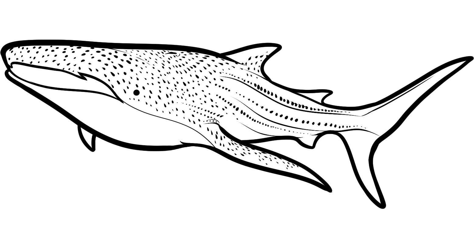 Free Printable Shark Coloring Pages Http Www Duoxheero Com Free Printable Shark Coloring Pages Html Coloringpages Shark Coloring Pages Have Nautical Them