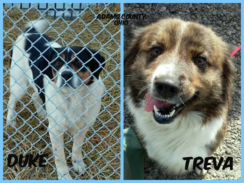 DUKE AND TREVA WENT TO RESCUE TODAY! 1282015 Dogs and