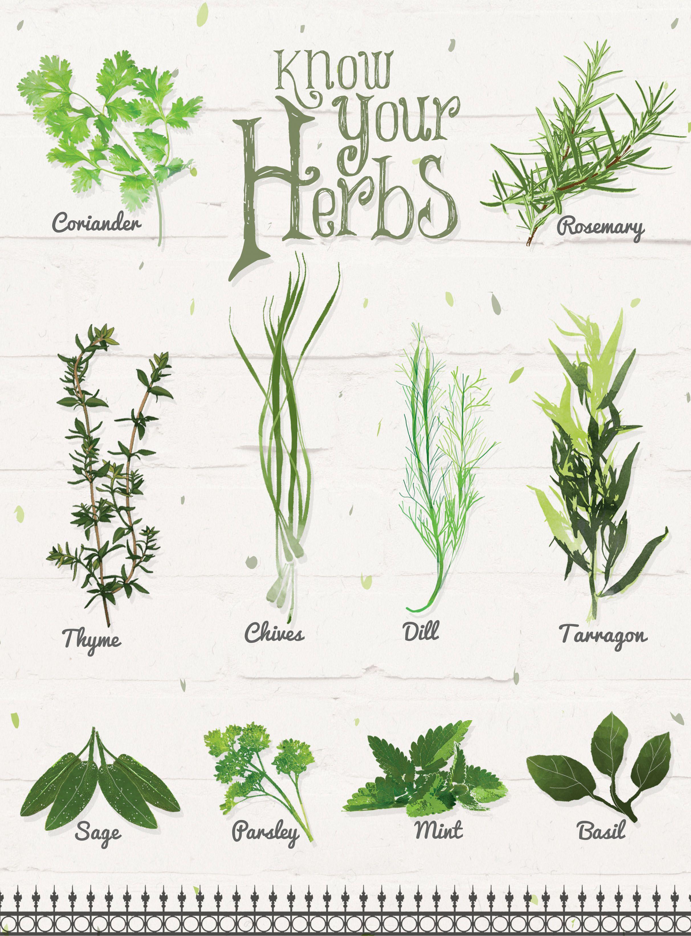 каталог пряных растений по алфавиту с картинками модели зачастую