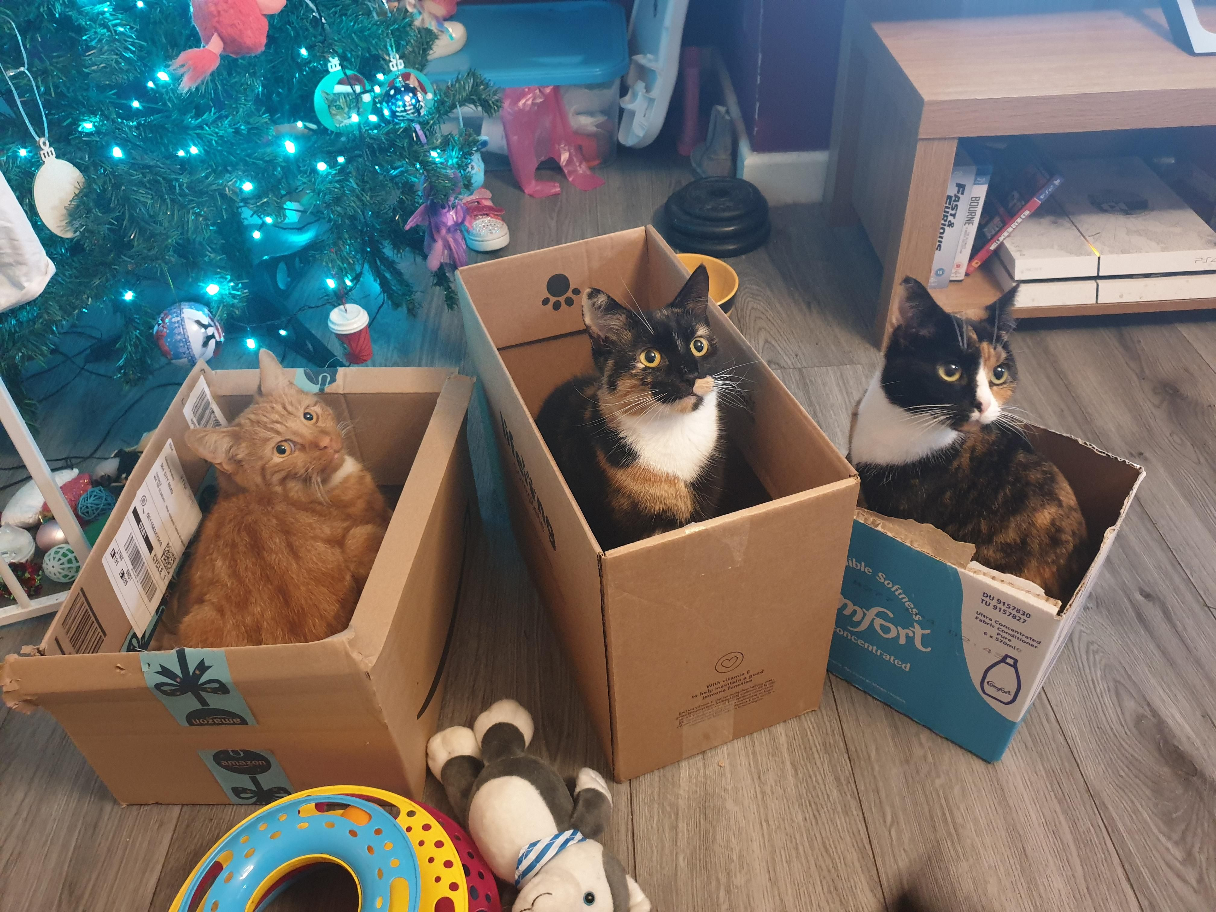 So Cats Like Boxes Who Knew Funny Cat Images Cute Kitten Gif Christmas Cats