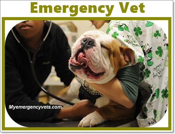 Top 10 Emergency Veterinarians, Cost and Clinics