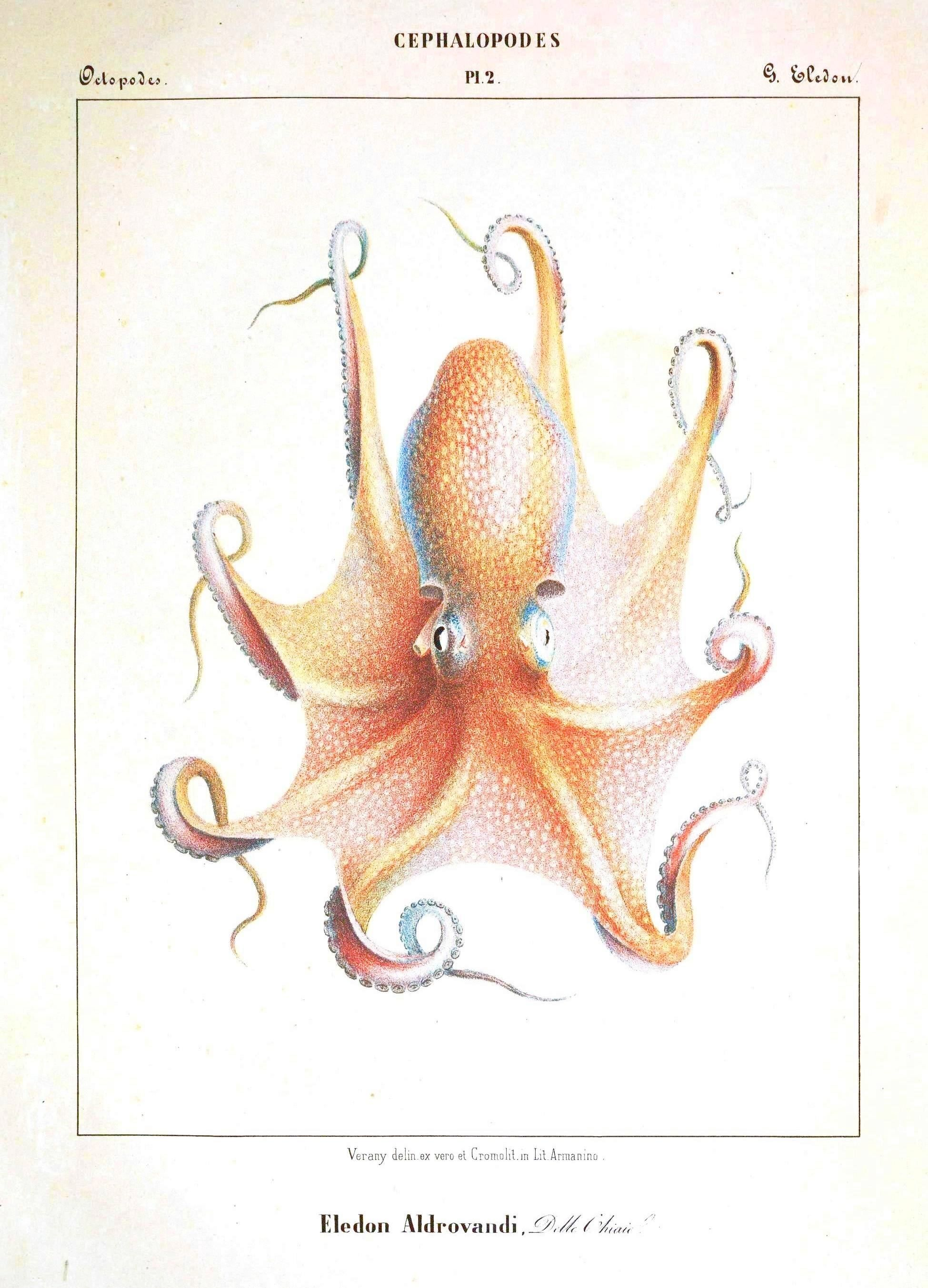 I love all the octopi prints in this vintage book! | Wall Art I Want ...
