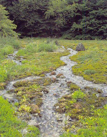 *Kilder og væld med kalkholdigt (hårdt) vand. *Kalkaflejrende vældmoser med tufdannelser ( Cratoneurion ).  Kilde med rig vækst af mosser. Ravnkilde, Rold Skov, Nordjylland. Foto: Bert Wiklund.  Kilder, væld og vældvegetation, hvor kildevandet er kalkholdigt (hårdt). Sådanne kilder aflejrer i større eller mindre grad kalk (tuf) omkring kilden. Kilderne er oftest meget små af udstrækning og punkt- eller linieformede. Vegetationen domineres typisk af mosser. Naturtypen findes i forskellige…