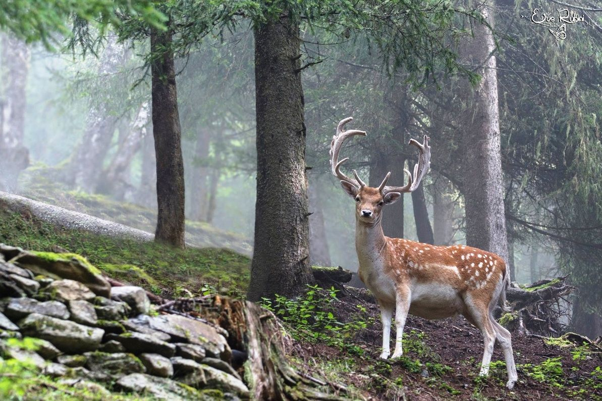 The Endless Forest Photo Animals, Photo, Cute animals