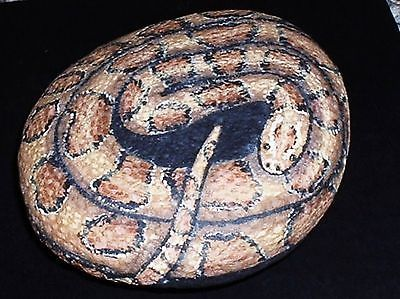Amber Corn Snake Painted Rock . Vivian Allen