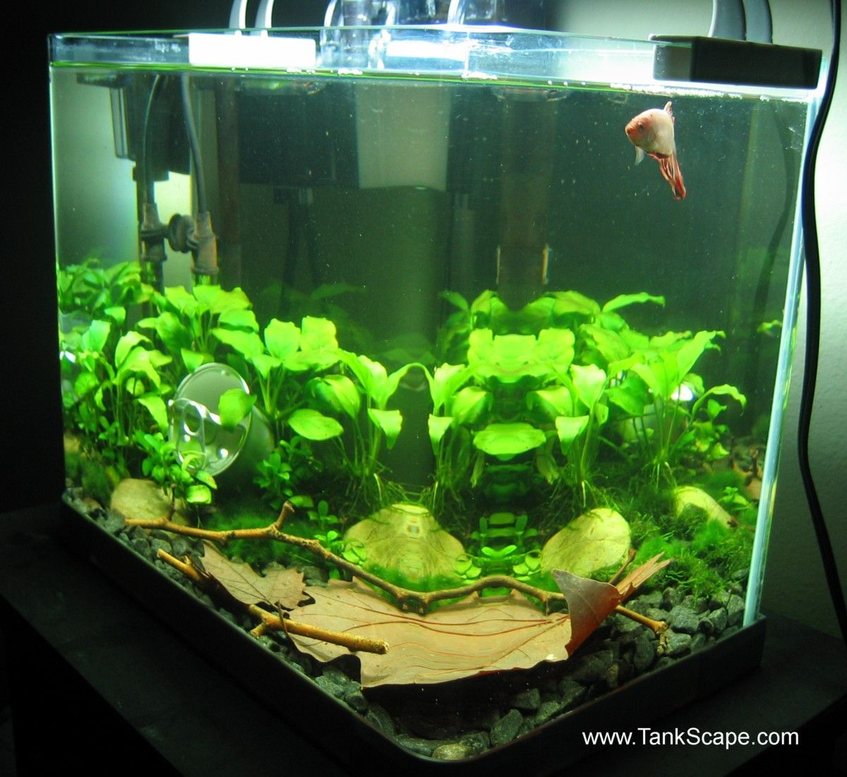 10 Gallon Fish Tank Stand Ideas For Your Aquarium Fish Tank Betta Fish Tank Betta Fish