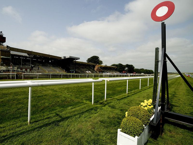 The July course at Newmarket. Horse racing bet, Horse