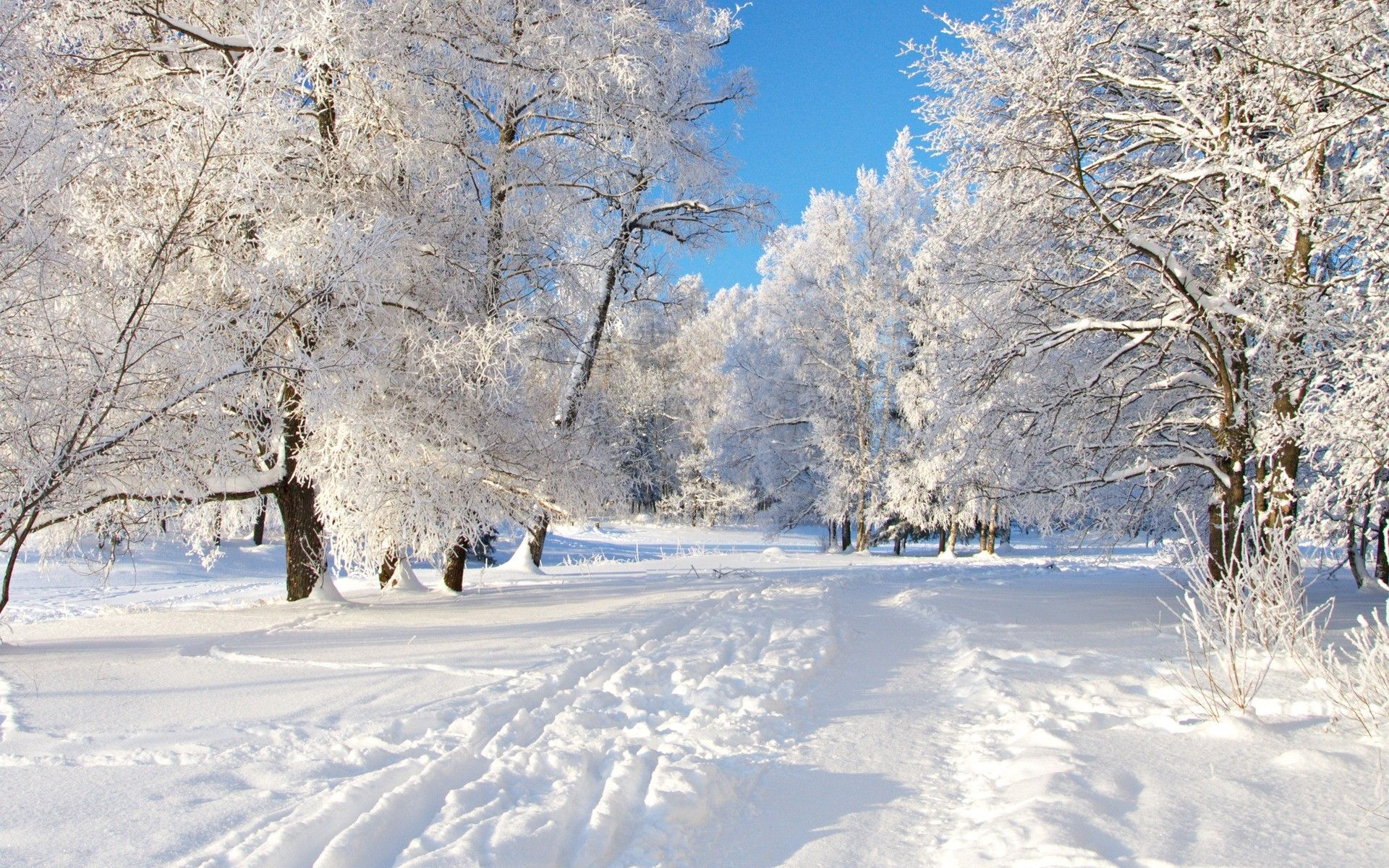 Winter Trees Winter Scenery Winter Wallpaper Desktop Winter Desktop Background