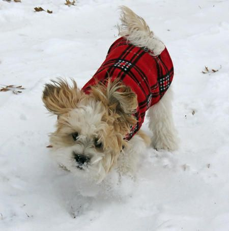 """Buddy was Featured on """"The Daily Puppy!!!"""" http://www.dailypuppy.com/puppies/buddy-the-shih-tzu-mix_2014-05-09"""