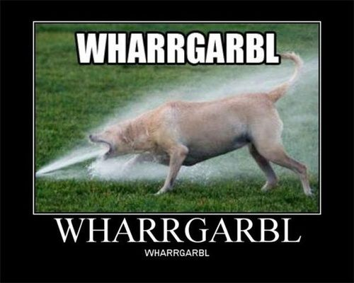 Funny Dog Water Sprinkler Poster Funny Dog Pictures Funny Dogs