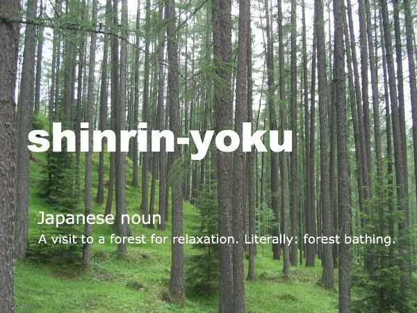 Image Result For Nature Japan Quote Japanese Quotes Forest