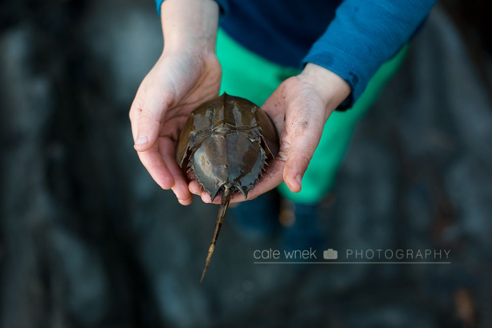 Found . . . Cate Wnek Photography