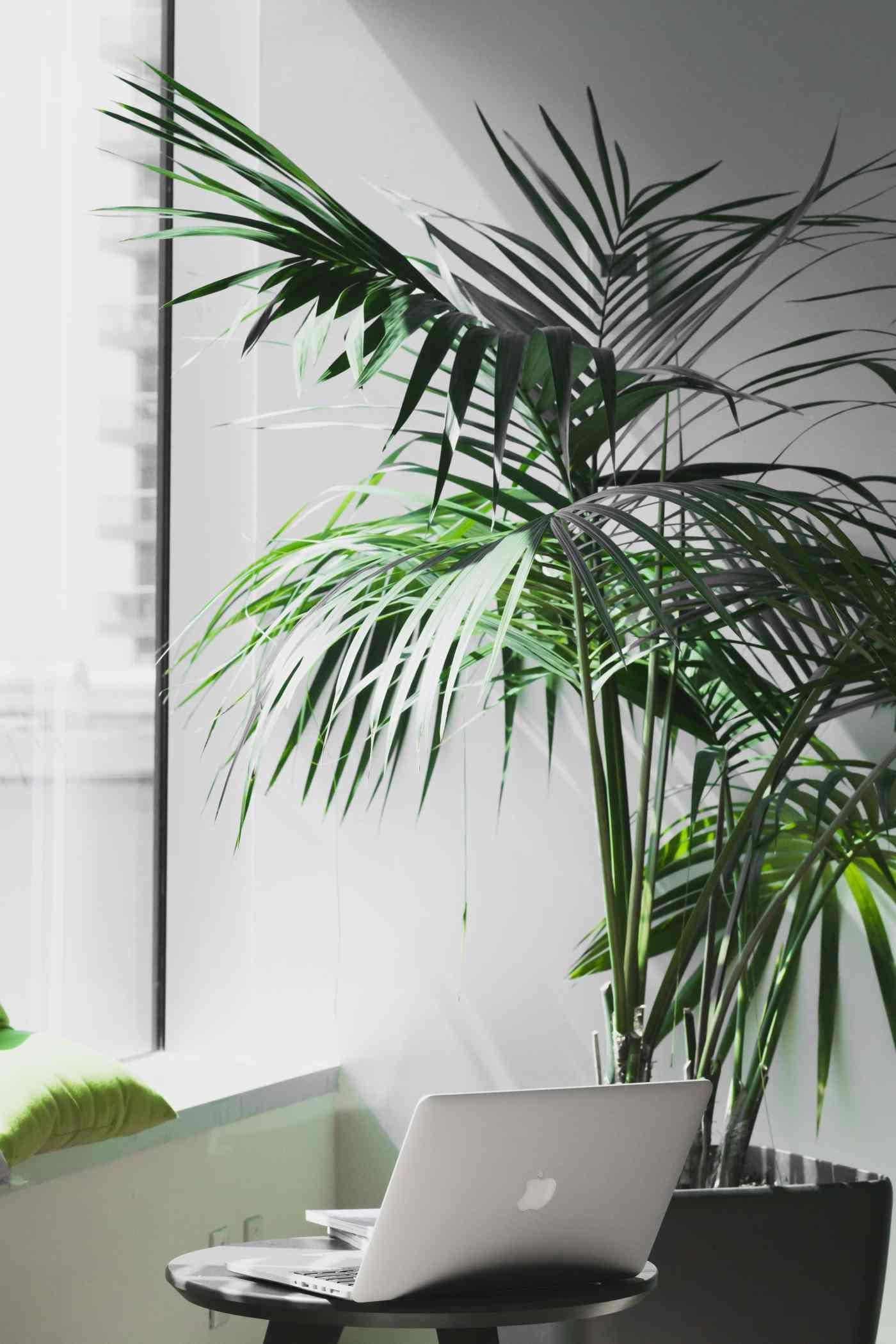 Best Plants For Dark Apartments Indoor Plants Low Light 400 x 300