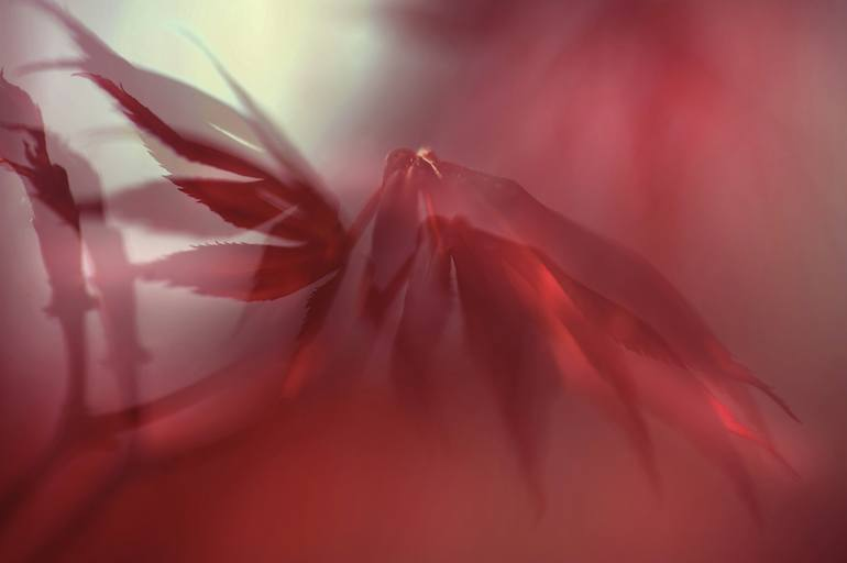 Passion Of Nature Limited Edition Of 25 Photograph In 2020 Nature Photographs Fine Art Giclee Prints Exposure Photography