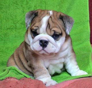 When wrinkles are cute