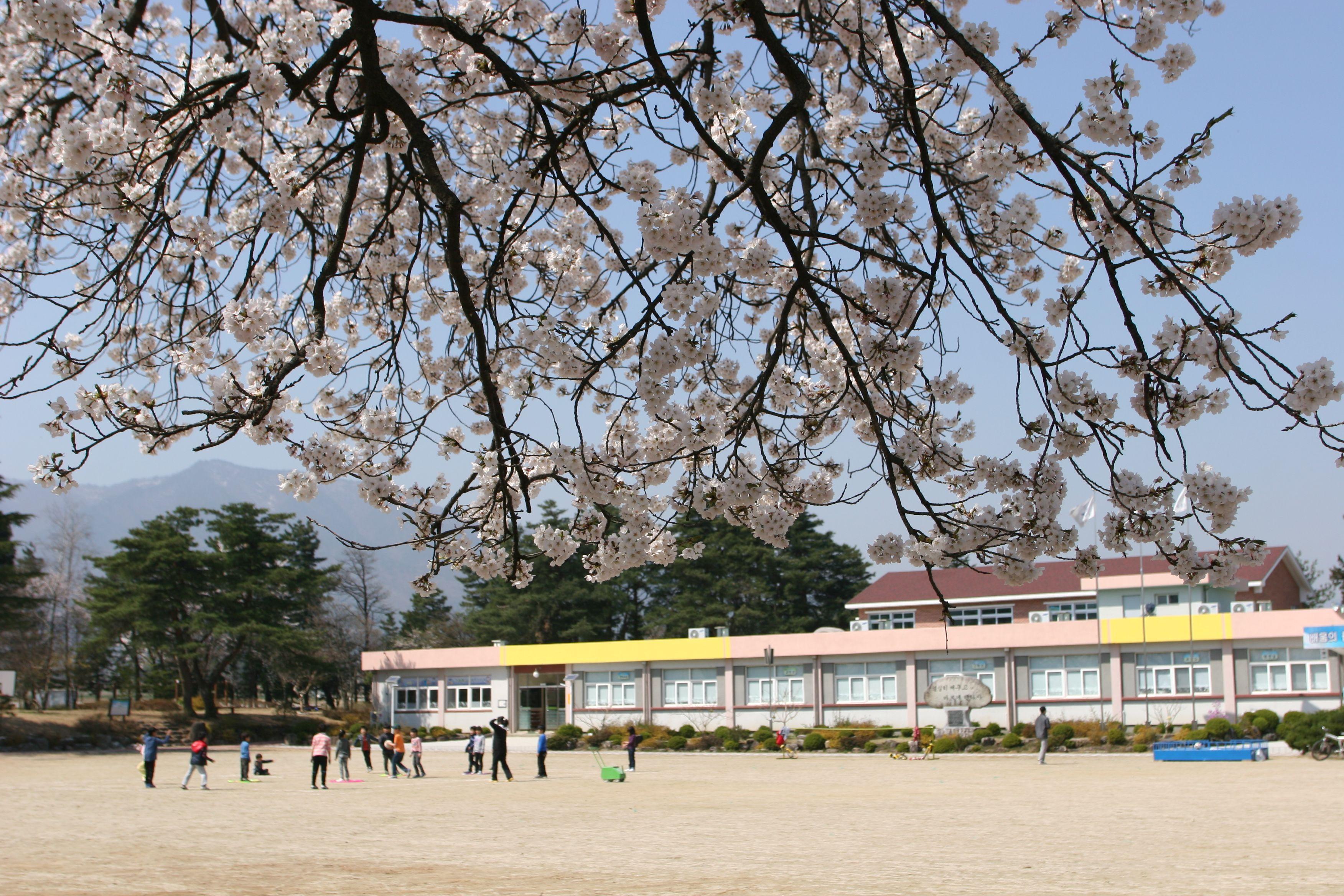 봄. 금광초등학교