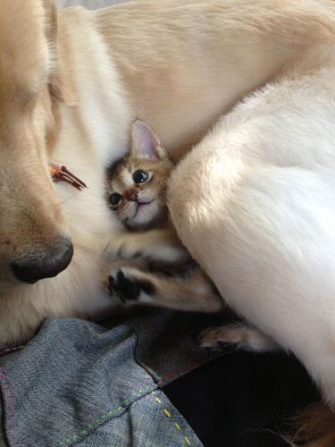 Photo of So precious!