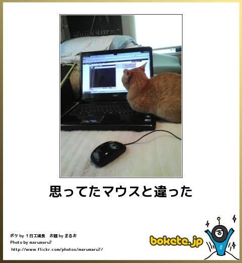癒される 猫ボケ画像ランキング ベスト40 猫 猫 写真 ボケ
