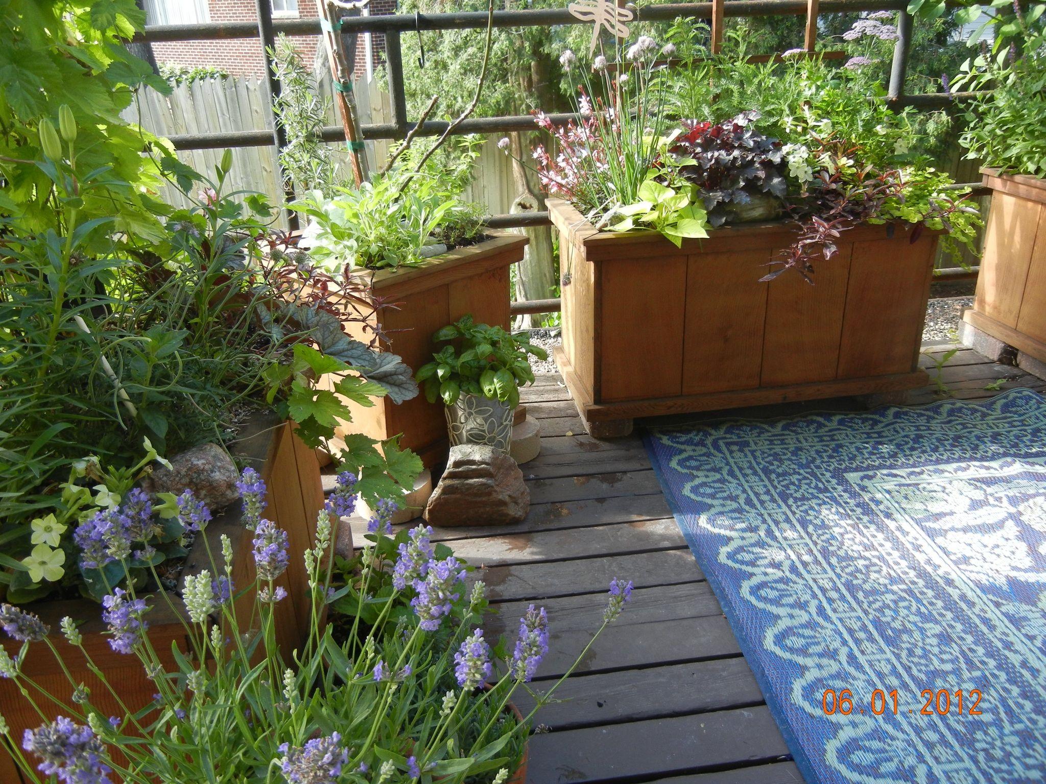 Balcony Garden Apartment Vegetable Garden City Garden 640 x 480