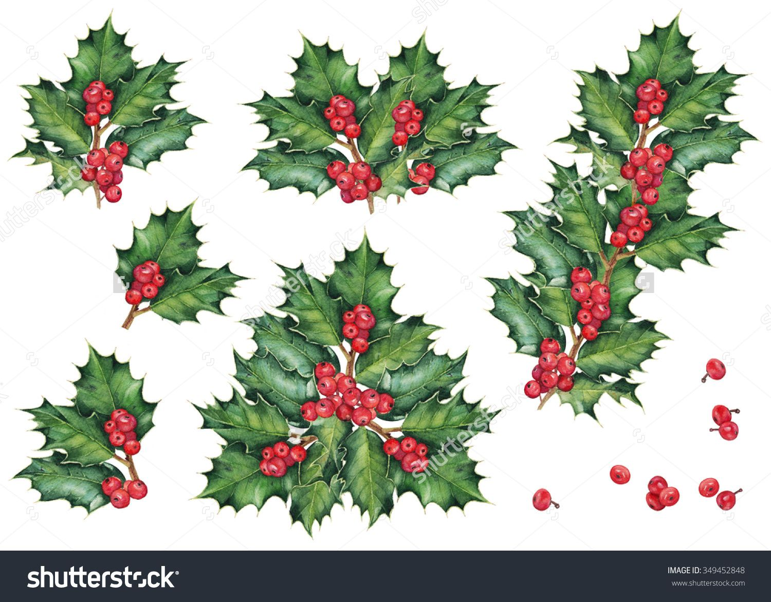 Green Christmas Holly Branches And Berries Set Of Decoration