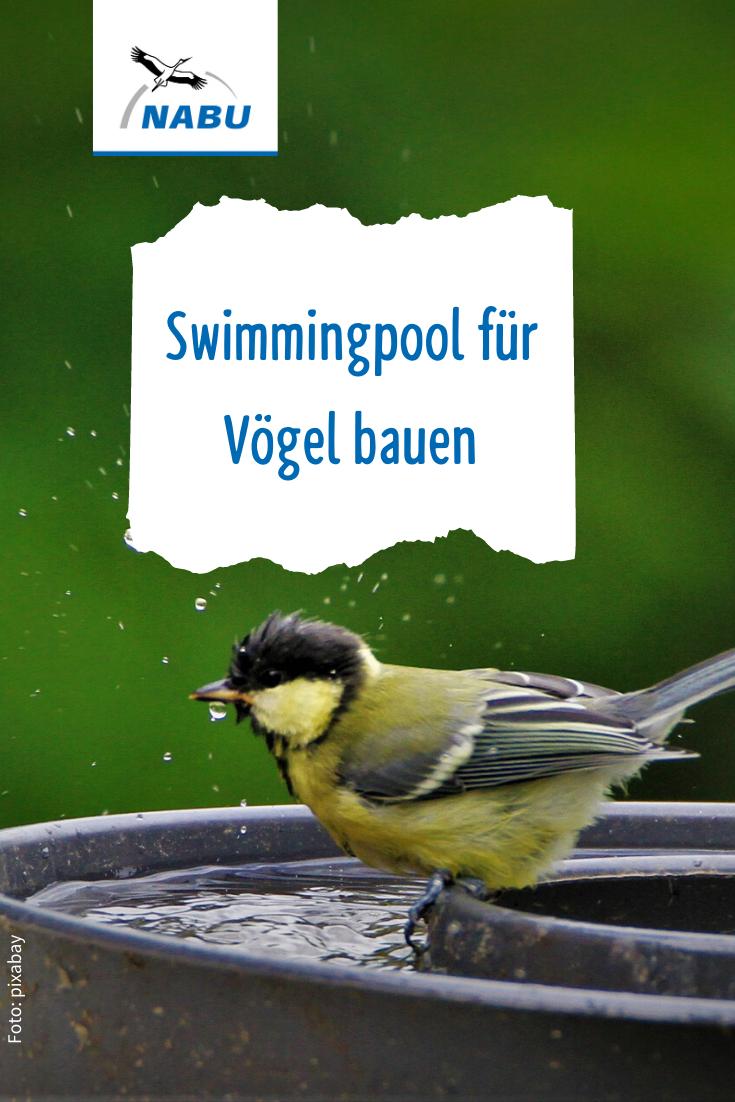 Video Tipps Vogeltranke Selbst Bauen Nabu Vogelbad Teichlandschafts Vogel Im Garten