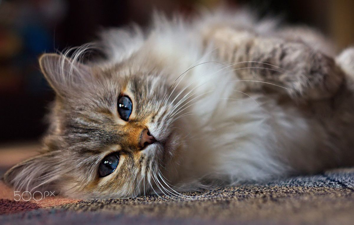 Indisputably blue eyes by Elena Solovieva on 500px