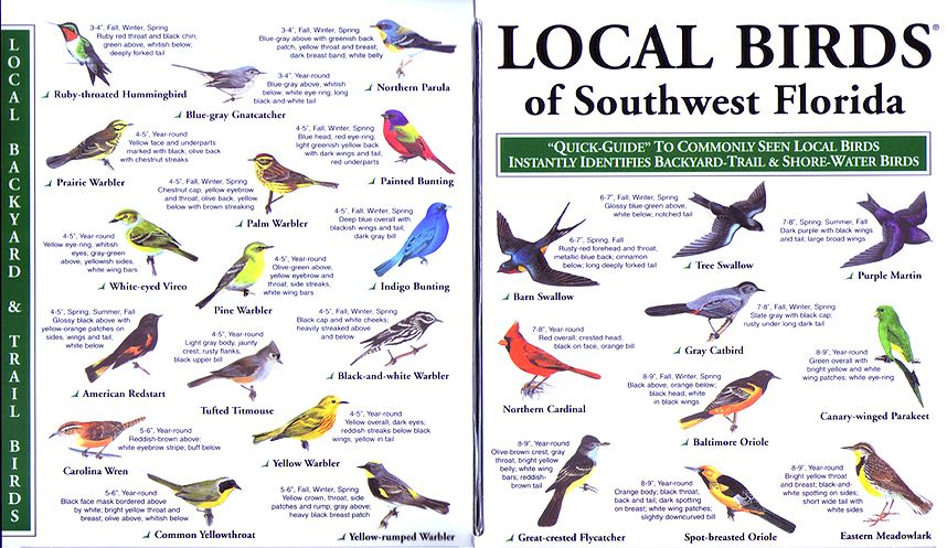 Southwest Florida   Bird identification, Backyard birds, Birds