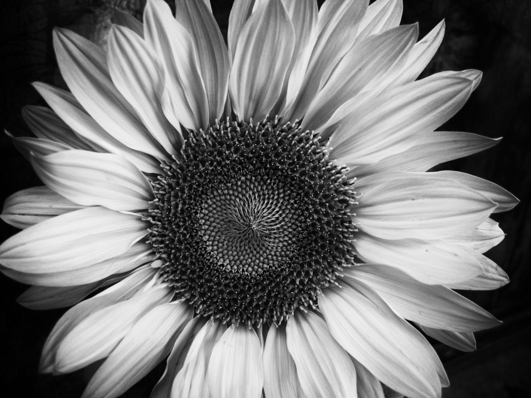 17 Best images about black and white on Pinterest | Paris black ...