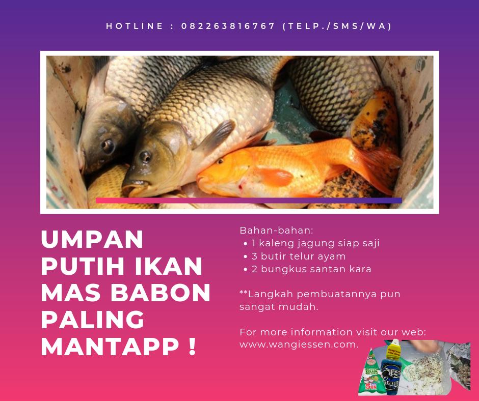 Resep Umpan Putih Ikan Mas Babon Paling Mantapp Fish Pet Fish Pets