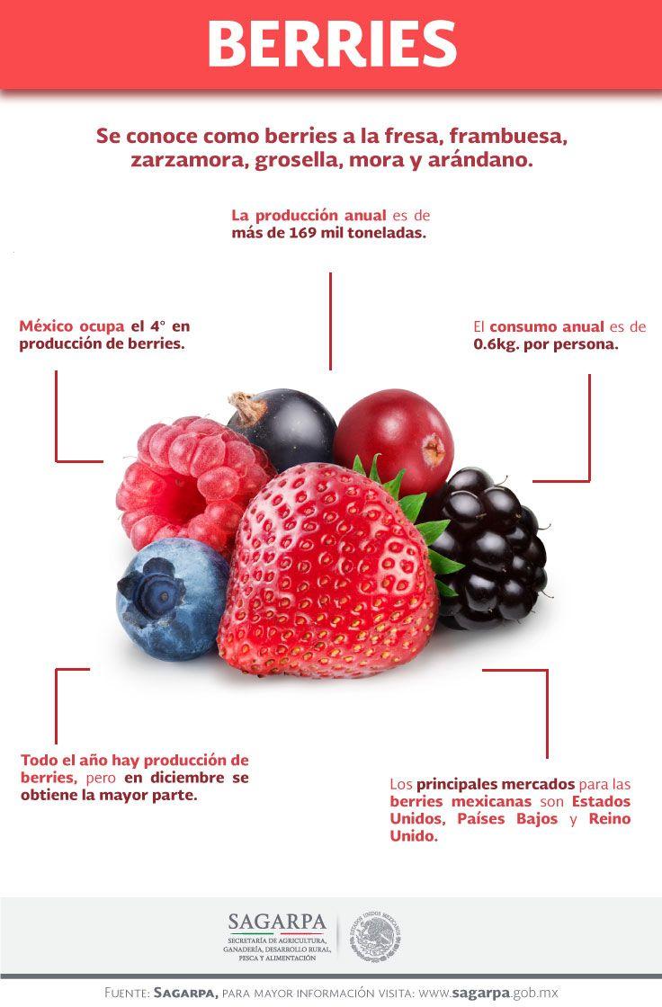 Se conoce como berries a la fresa, frambuesa, zarzamora, grosella, mora y arándano. SAGARPA SAGARPAMX