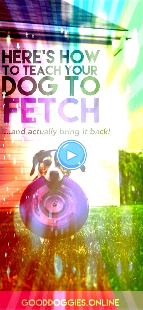 Teach Your Dog to Fetch Check out these dog training tips that are fun and easyHow to Teach Your Dog to Fetch Check out these dog training tips that are fun and easy Do y...