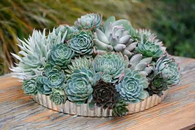 Via lila b design succulent succulence in containers for Artichaut plante grasse