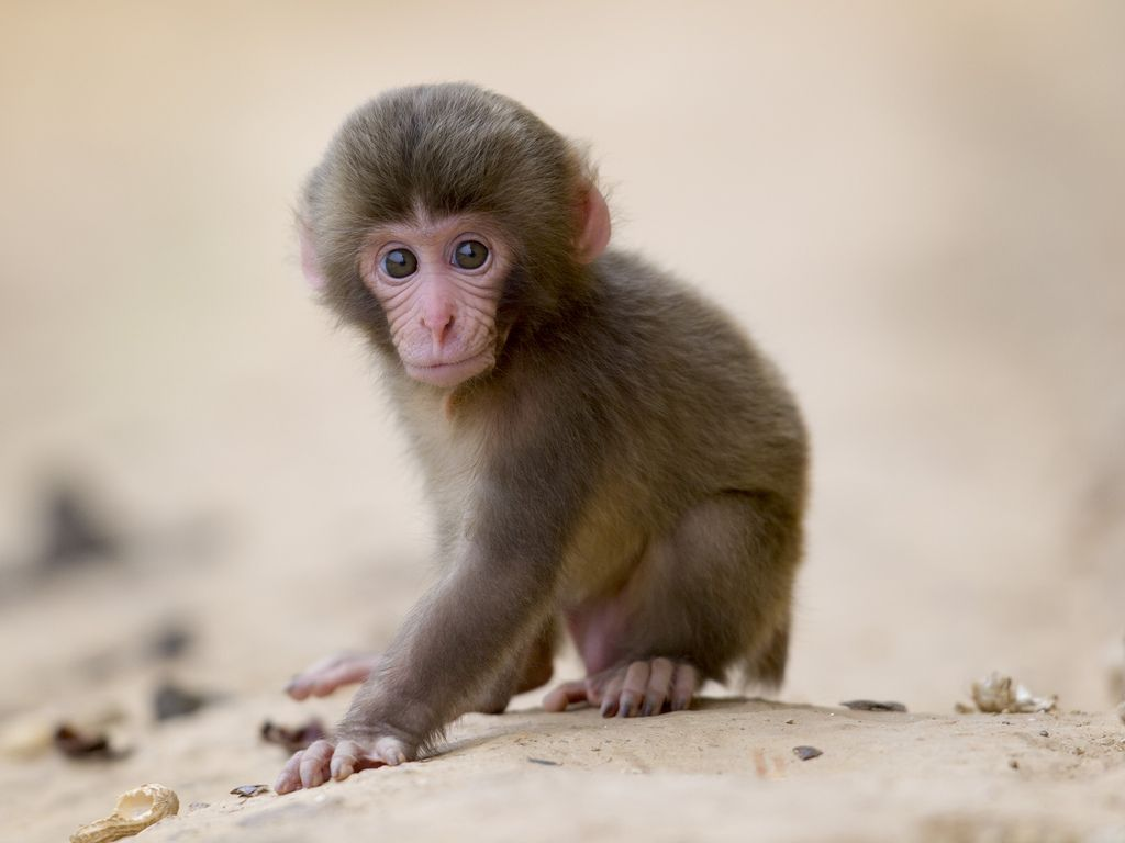 images of cute baby monkeys - photo #30