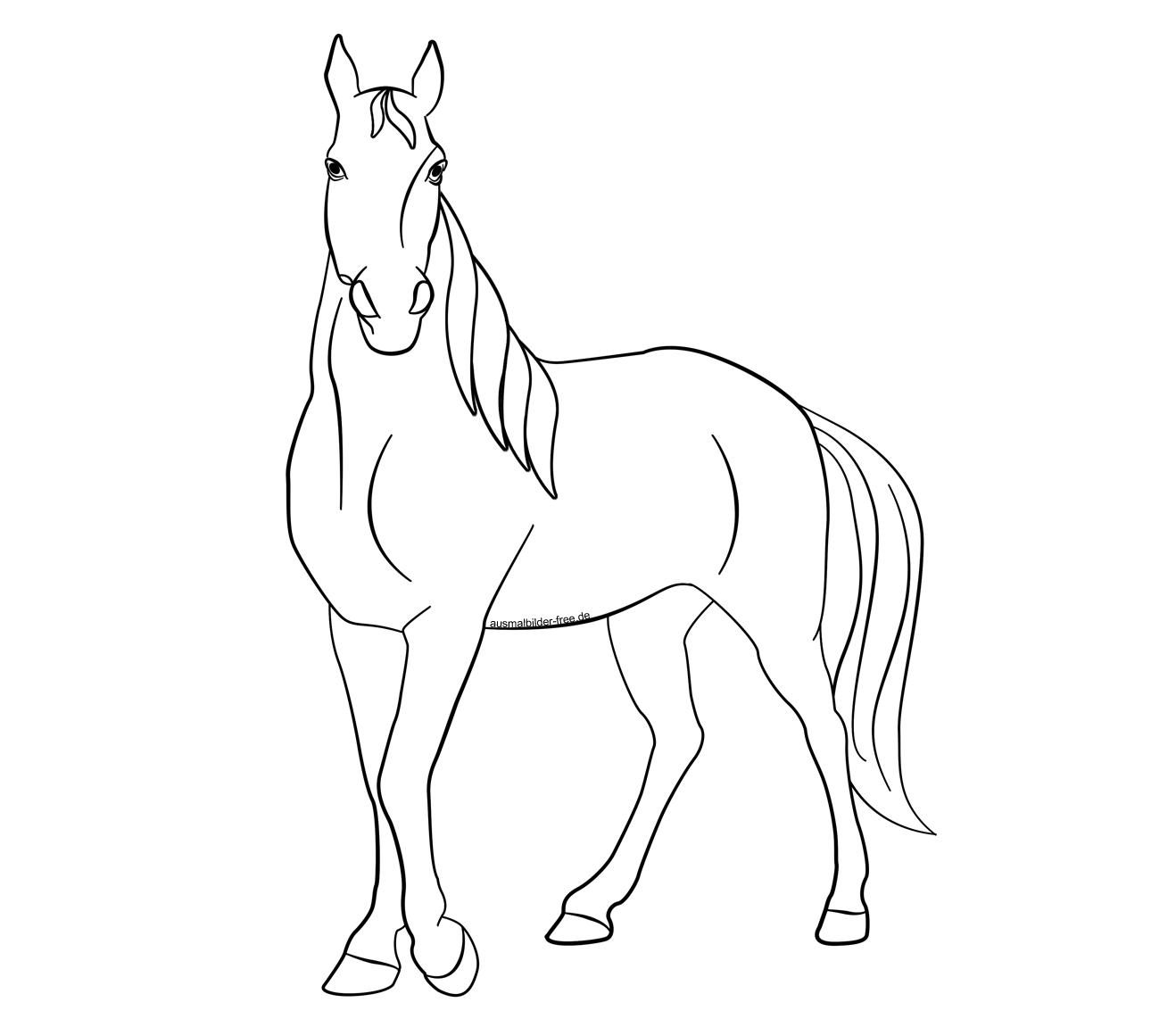 Ausmalbilder Tiere Pferd Pferde Gaul Ackergaul Ponny Karikaturen