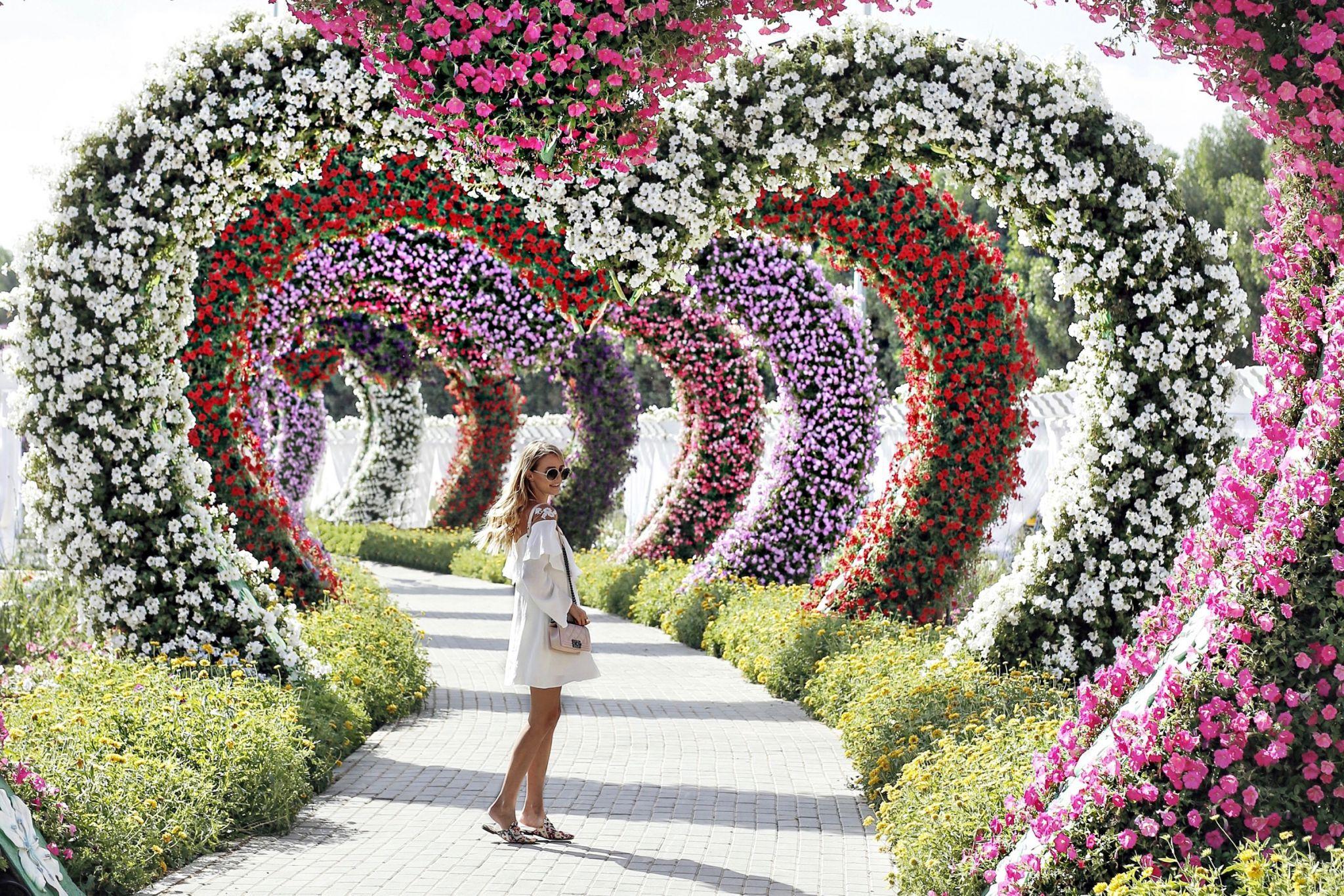 Miracle garden Miracle garden, Dubai garden, Botanical